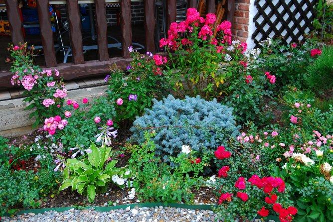 Цветы для палисадника своими руками